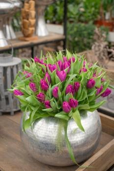 10123180_Purple_Prince_Hobaho_Beeldbank