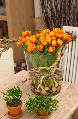 10126921_Remarkable_Tulips_Hobaho_Beeldbank_(2)_mid